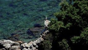 Zeemeeuw op Rotsen, Marmaris Mugla stock video