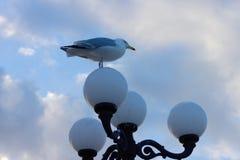 Zeemeeuw op straatlantaarn van Brighton Pier stock afbeelding