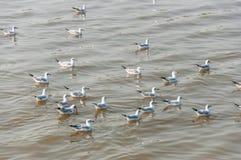 Zeemeeuw op water royalty-vrije stock afbeeldingen