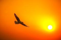 Zeemeeuw op zonsondergang stock afbeeldingen