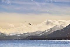 Zeemeeuw openlijke Tahoe royalty-vrije stock afbeelding