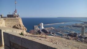 Zeemeeuw over de Jachthaven van Alicante Stock Foto