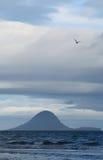 Zeemeeuw over Eiland Moutohora Stock Fotografie
