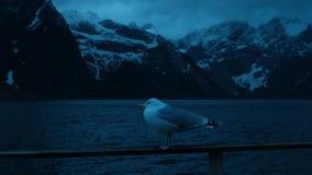 Zeemeeuw overzeese nacht Noorwegen stock videobeelden