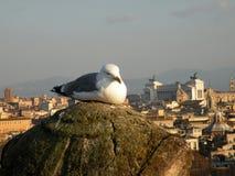 Zeemeeuw in Rome Royalty-vrije Stock Fotografie