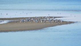 Zeemeeuw sandspit Royalty-vrije Stock Foto