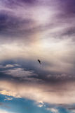 Zeemeeuw tegen blauwe en purpere hemel royalty-vrije stock foto