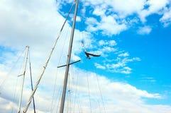 Zeemeeuw tussen masten Royalty-vrije Stock Foto