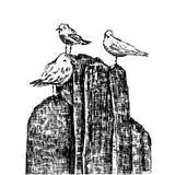 Zeemeeuw vectordieschets op witte achtergrond, Hand wordt geïsoleerd getrokken illustratie, uitstekende gravurestijl, lay-out voo royalty-vrije illustratie