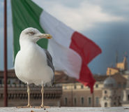 zeemeeuw in Venetië in Italië Royalty-vrije Stock Afbeeldingen
