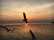 Zeemeeuw in zonsondergang royalty-vrije stock fotografie