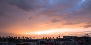 Zeemeeuw in Zonsondergang over de Haven van New Port Beach in zuidelijk Californië de V.S. stock foto's