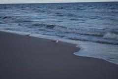 zeemeeuwen Stock Fotografie