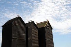 Zeemeeuwen bij de visserij van hutten, Hastings Stock Fotografie