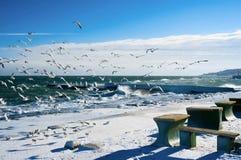 Zeemeeuwen bij de winteroverzees Stock Afbeeldingen