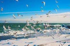 Zeemeeuwen bij de winteroverzees Royalty-vrije Stock Afbeelding