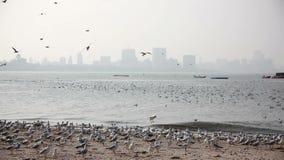 Zeemeeuwen bij Mumbai-strand stock videobeelden