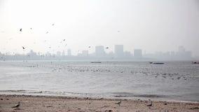 Zeemeeuwen bij Mumbai-strand stock footage