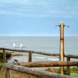 Zeemeeuwen bij torquay strand royalty-vrije stock fotografie