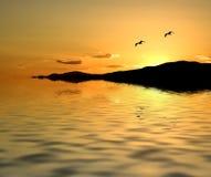 Zeemeeuwen bij Zonsondergang Royalty-vrije Stock Afbeeldingen