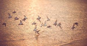 Zeemeeuwen bij Zonsondergang Royalty-vrije Stock Afbeelding