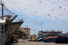 Zeemeeuwen die boven de haven in Essaouira vliegen Stock Afbeelding