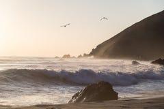 Zeemeeuwen die boven golven bij Pfeiffer-het Park van de Staat, Grote Sur, Cal vliegen Royalty-vrije Stock Foto's
