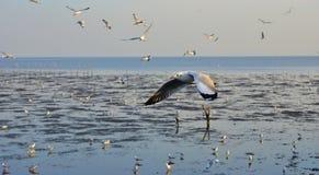 Zeemeeuwen die boven het overzees vliegen Royalty-vrije Stock Fotografie