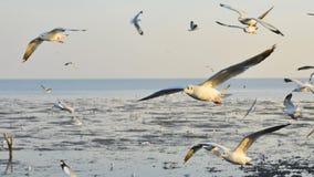 Zeemeeuwen die boven het overzees vliegen Stock Afbeeldingen