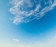 Zeemeeuwen die in de blauwe hemel vliegen royalty-vrije stock afbeelding