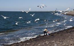 Zeemeeuwen die in de hemel vliegen Stock Fotografie