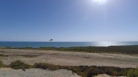 Zeemeeuwen die in de wind langs de kust van Zuidelijk Californië op een zonnige de zomerdag stijgen stock footage