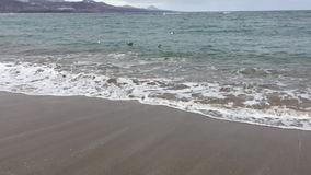 Zeemeeuwen die in het overzees zwemmen stock video