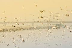 Zeemeeuwen die hierboven - water vliegen Royalty-vrije Stock Afbeelding