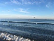 zeemeeuwen die onder overzees vliegen Royalty-vrije Stock Foto