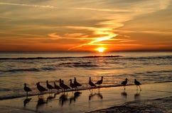 Zeemeeuwen die op de zonsondergang letten stock foto's