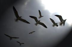 Zeemeeuwen die op Donkere Hemel worden gesilhouetteerd Royalty-vrije Stock Afbeelding