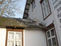 Zeemeeuwen die op een dak in Rorvik roosting stock afbeeldingen
