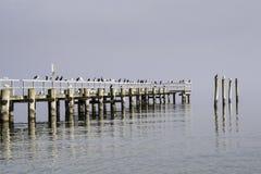 Zeemeeuwen die op een houten pijler zitten Royalty-vrije Stock Fotografie
