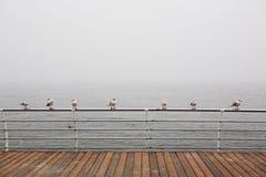Zeemeeuwen die op het traliewerk zitten stock fotografie