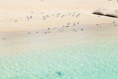 Zeemeeuwen die op het zand blijven Stock Foto's