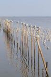Zeemeeuwen die op pijlers houden Stock Foto's