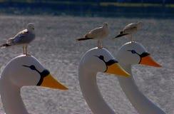 Zeemeeuwen die op zwaanboten zitten royalty-vrije stock afbeelding