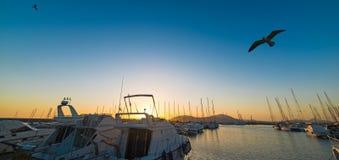 Zeemeeuwen die over Alghero-haven vliegen Stock Foto
