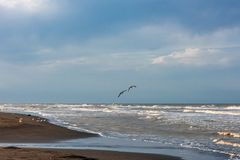 Zeemeeuwen die over de kust vliegen stock foto