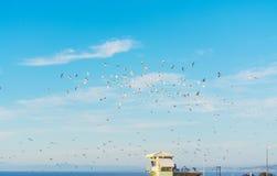 Zeemeeuwen die over een badmeesterhut vliegen stock afbeeldingen