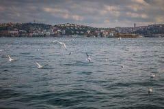 Zeemeeuwen die over het Bosphorus-kanaal, Istanboel, Turkije vliegen Stock Afbeeldingen