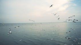 Zeemeeuwen die over het overzees vliegen stock video