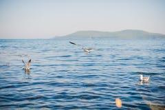 Zeemeeuwen die over het overzees vliegen Stock Fotografie