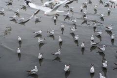 Zeemeeuwen die over of over het overzees vliegen bij zonsondergang stijgen Royalty-vrije Stock Foto's
